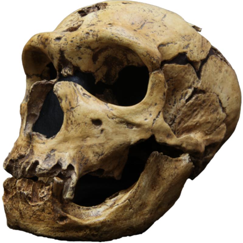 Chapelle aux saints neandertal