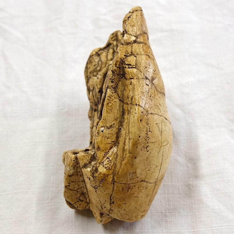 Vénus la poire brassempouy 3