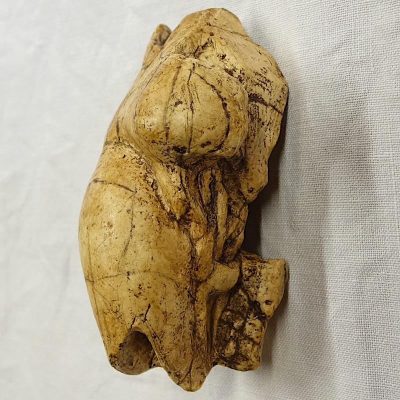 Vénus la poire brassempouy 4