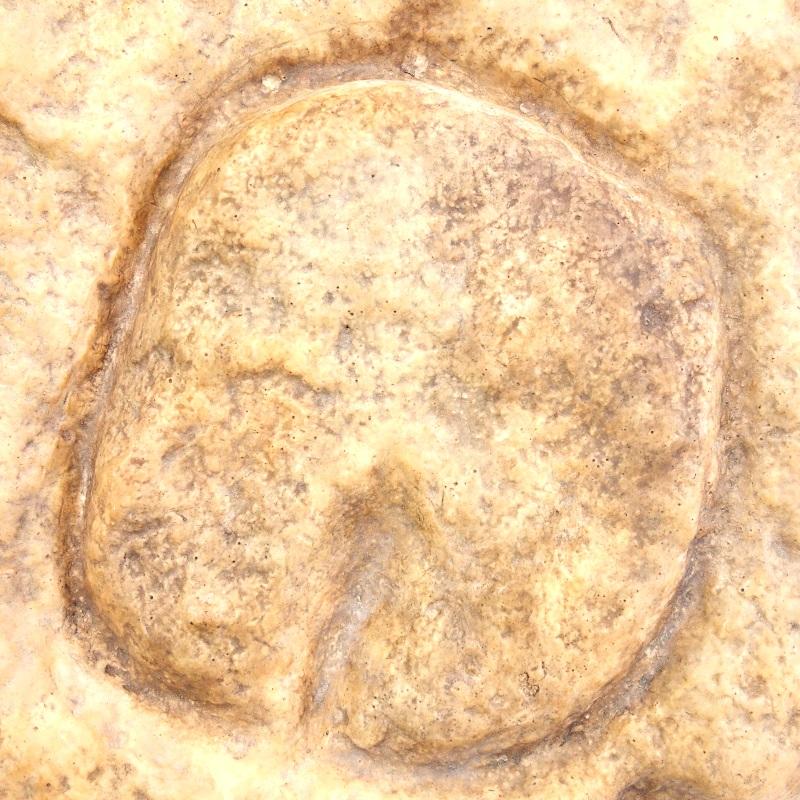 Vulve sur plaque abri blanchard 2