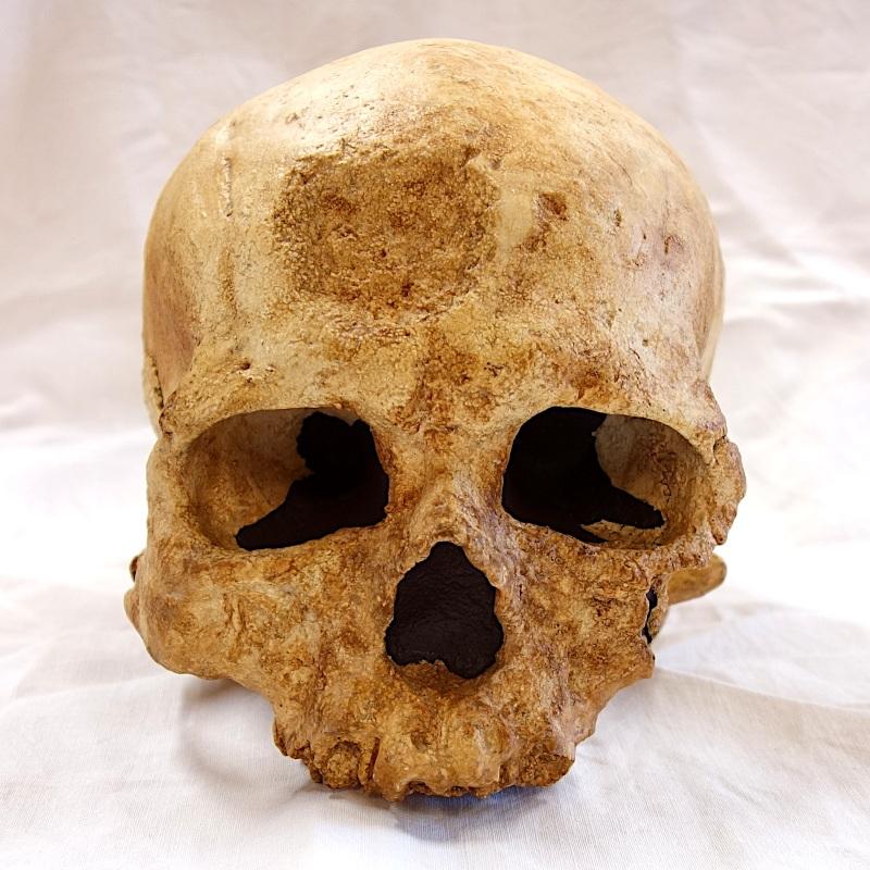 Crâne cro magnon 1