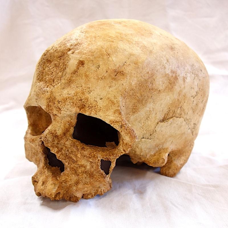 Crâne cro magnon 2