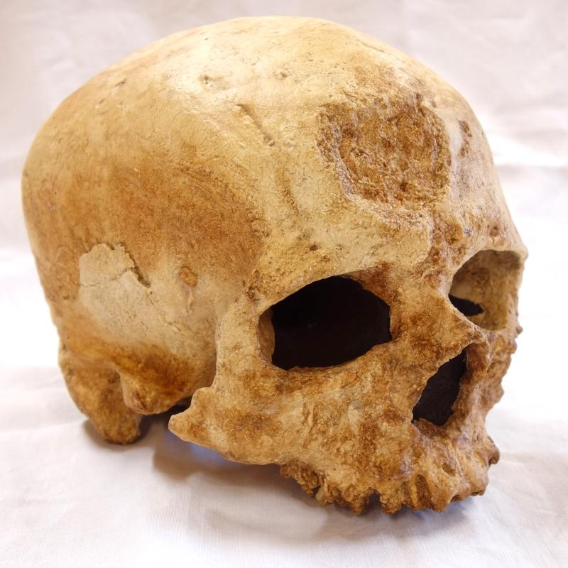 Crâne cro magnon 3