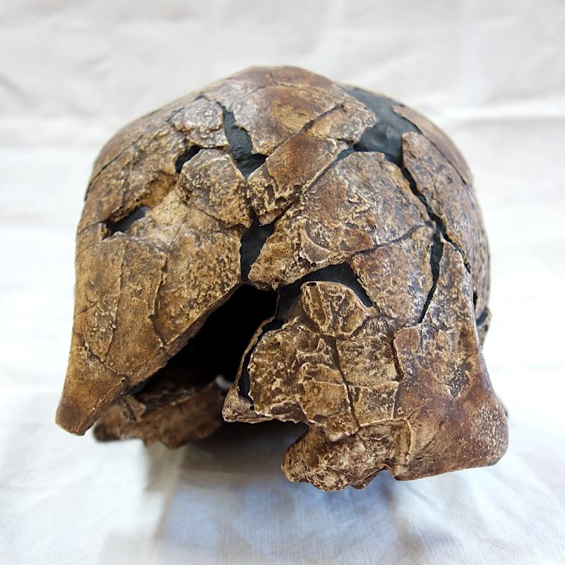 Calotte omo II - Homo sapiens - Kibish