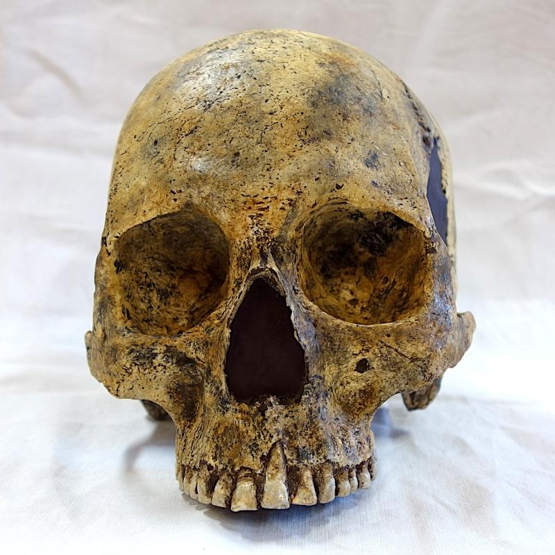 Crâne de «L'Homme d'Aïn Dokkara» - Homo Sapiens - Tébessa