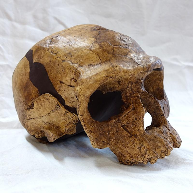 "Crâne Djebel Irhoud 1 - Homo sapiens ""archaïque"""