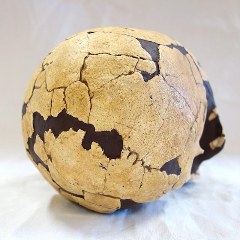 Crâne La Genière - Homo sapiens (enfant)
