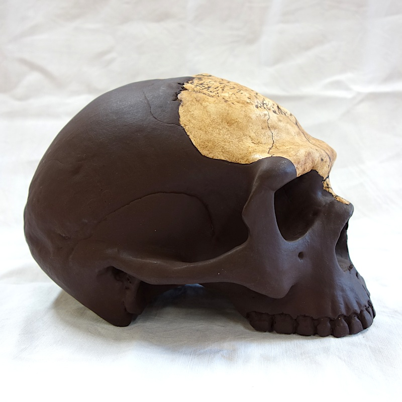 "Crâne Nanjing 1 ""L'Homme de Nankin"" - Homo erectus"