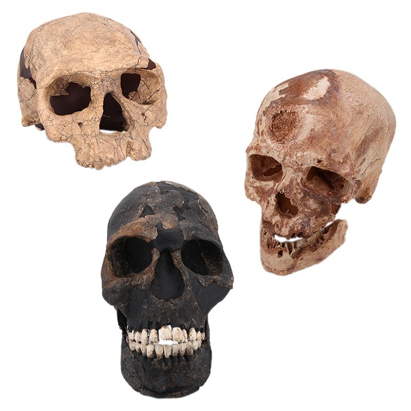 Les premiers sapiens