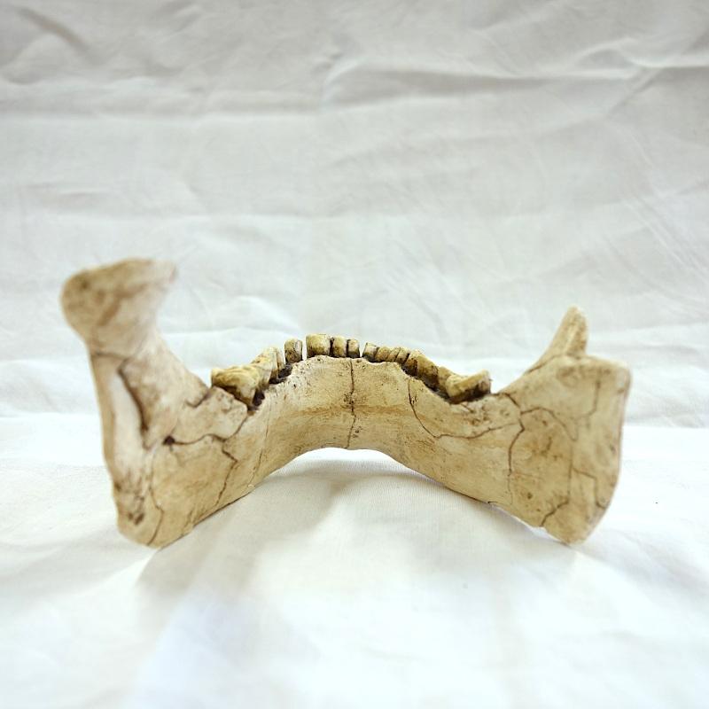 Mandibule de Banyoles - Pré-néandertalien